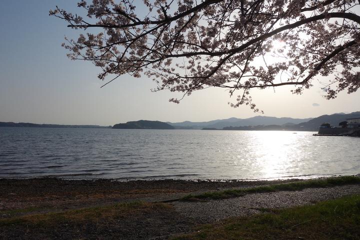 浜名湖の桜スポット