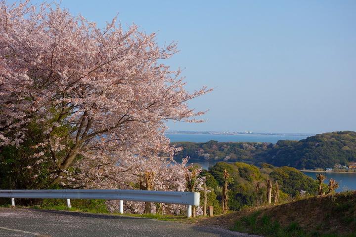 浜名湖の桜・お気に入りスポット2