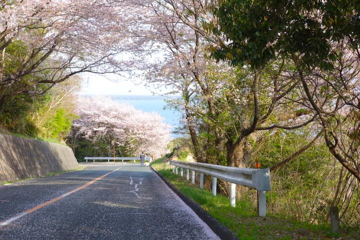 浜名湖の桜スポット・お気に入り